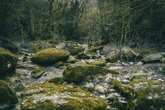 有绿色青苔的大石道路在森林中间 免版税库存照片