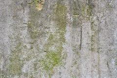有绿色青苔的老灰色石墙 库存图片