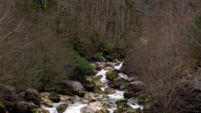 有绿色青苔盖的岩石的山河 阿布哈兹的冬天森林 股票视频