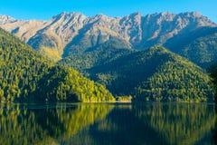 有绿色Forest Hills的美丽的山湖岸的 Ritsa湖,阿布哈兹 免版税库存照片