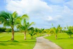 有绿草推车道路和椰子树的高尔夫球场 免版税库存照片