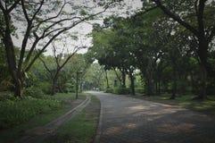 有绿草的空的石砖步行方式道路和树在客栈 免版税图库摄影