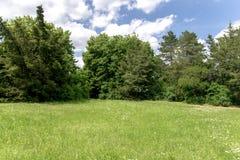 有绿草的芒在一个绿色夏天晴朗的公园 库存照片