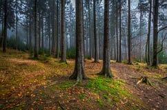有绿草的蠕动的神秘的森林和五颜六色的下落的树在捷克Moravian高地 免版税库存照片