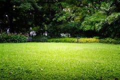 有绿草领域和绿色新鲜的植物的公园 免版税库存照片