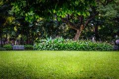 有绿草领域和绿色新鲜的植物的公园 免版税库存图片