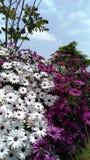 有罕见的植物的Nikitansky庭院 图库摄影
