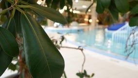 有美丽的干净的大海的豪华旅游胜地游泳场 4K 在手段水池的热带树 股票视频
