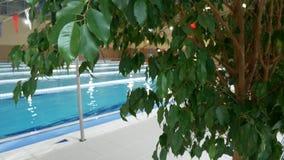 有美丽的干净的大海的豪华旅游胜地游泳场 4K 在手段水池的热带树 股票录像