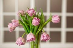 有美丽的紫色郁金香花束的玻璃花瓶以污迹玻璃窗为背景的 库存图片