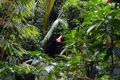 有美丽的花的雨林 免版税库存图片