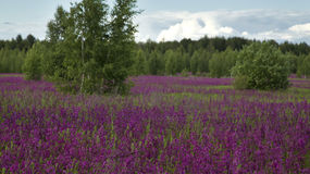 有美丽的野花的草甸夏令时 库存照片