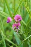 有美丽的紫罗兰色花的领域植物 免版税库存图片