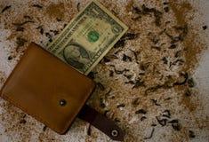 有美元的钱包在背景 图库摄影