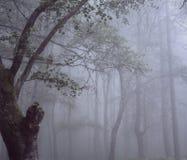 有美好的光的有雾的森林 免版税库存图片