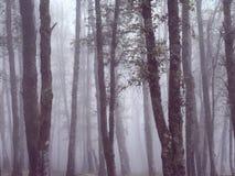 有美好的光的有雾的森林 库存照片
