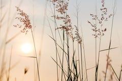 有美好的日落的植物 库存图片