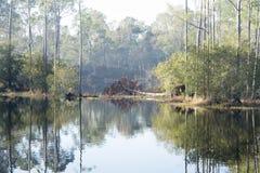 有美好的树反射的有雾的森林 免版税库存图片