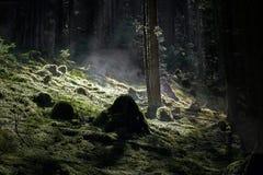 有美好的阳光的有雾的森林 免版税图库摄影