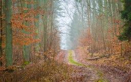 有美好的颜色和含沙路的秋天森林 免版税库存图片