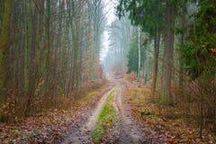 有美好的颜色和含沙路的秋天森林 免版税库存照片