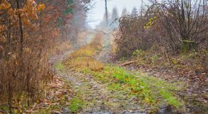 有美好的颜色和含沙路的秋天森林 免版税图库摄影