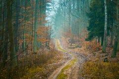 有美好的颜色和含沙路的秋天森林 图库摄影