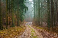 有美好的颜色和含沙路的秋天森林 库存照片