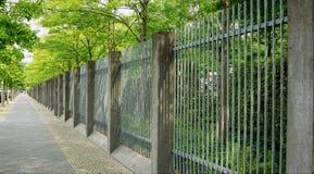 有美妙地几何篱芭的沿途有树的边路 免版税库存照片