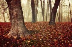 有老光秃的树和下落的红色叶子的秋天有雾的森林在地面上 库存图片