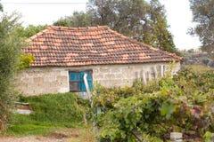 有老农厂房子废墟的葡萄园在秋天 免版税图库摄影