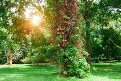 有老树和人行道的夏天公园在早晨太阳 免版税库存照片