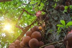 有老树的夏天公园在早晨太阳 库存图片