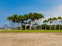 有老虎山的在背景中,里约热内卢,巴西弗拉门戈队公园 免版税库存照片
