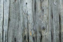有老钉子的老木委员会 库存图片