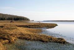 有老鸭子窗帘的沼泽 免版税库存图片