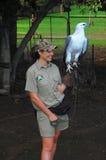 有老鹰的妇女在澳大利亚动物园里 库存图片