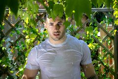 有肌肉和光秃的胸口的英俊的半赤裸人在阵雨捉住了在庭院里 免版税图库摄影