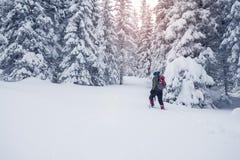有背包的人横跨具球果森林去在雪风暴以后 库存图片