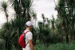 有背包的人走在森林里的 免版税库存图片