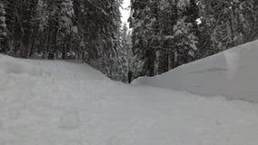 有背包的妇女沿雪道走在森林里 股票视频