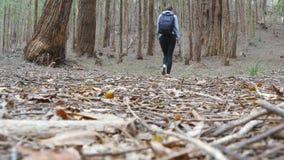有背包的年轻女人游人走在森林女性背包徒步旅行者的审阅木头在暑假时 股票视频