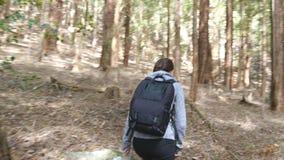 有背包的年轻女人游人走在森林女性背包徒步旅行者的审阅木头在暑假时 股票录像