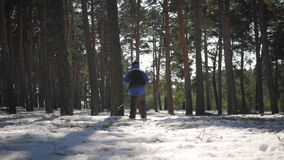 有背包的徒步旅行者走在杉木森林里的盖用深雪 冬天活动和休闲概念 股票视频