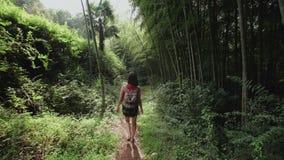 有背包的旅客女孩沿道路走在热带公园,植物,棕榈树,竹种植园 股票录像