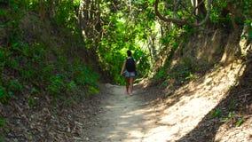 有背包的旅行的妇女走在森林路的支持看法 走在道路的旅游妇女在雨林夏天 股票录像