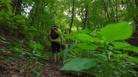 有背包的男性和女性远足者走在夏天森林里的支持看法 跟踪steadicam射击的4K 股票录像