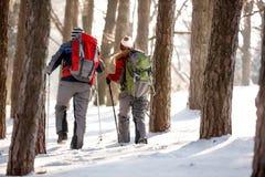有背包的远足者在森林里 库存图片