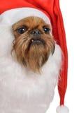 有胡子的狗滑稽的圣诞老人 免版税库存照片