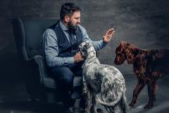 有胡子的男性和两条爱尔兰人的特定装置狗 免版税图库摄影